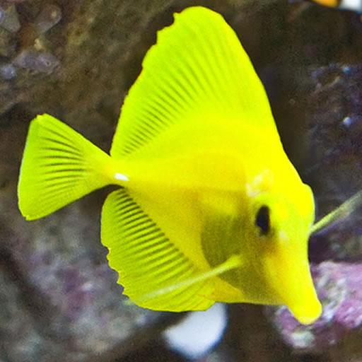 Tap puzzles aquarium fish edition by fse llc for Tap tap fish